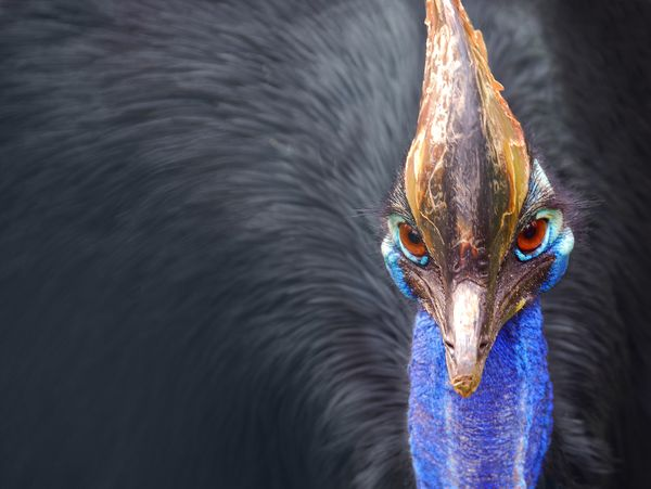 What's the Cassowary Project?